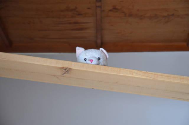 cat-kotaro2