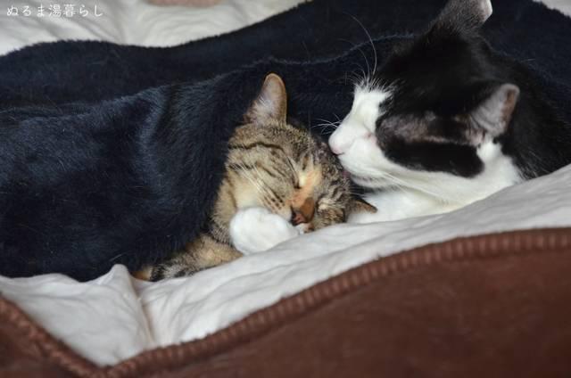 cat-vaccine