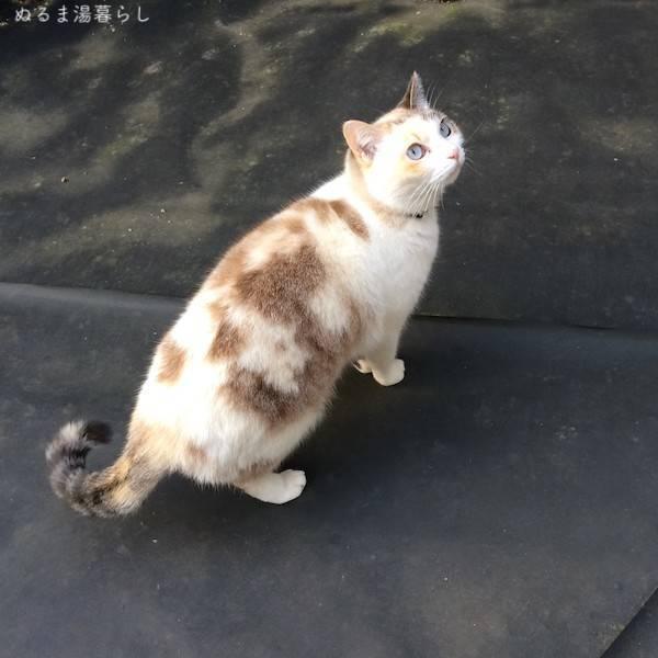 stray-cat-tanuki2