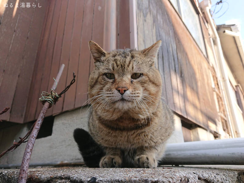 cat's-day-2020d