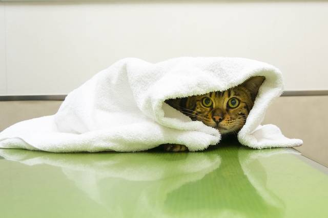 gauze-towel