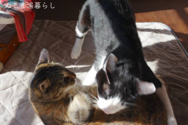 kintsugi-then8