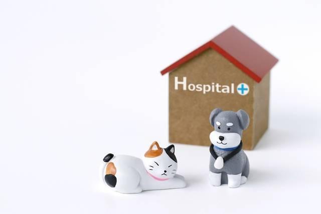 animal-hospital