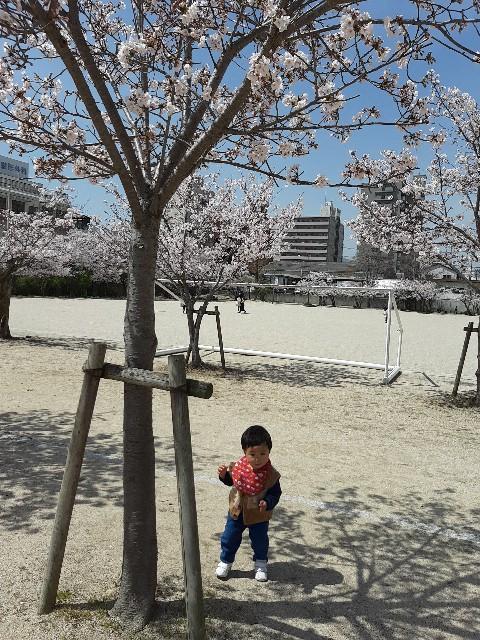 f:id:komochi_konbu:20210401061943j:image