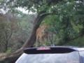木の枝に登ってるライオン
