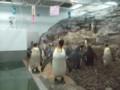 ペンギンたちは現在子育て期まっさかり!
