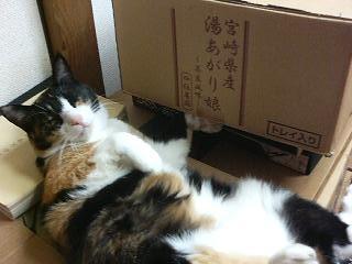 f:id:komonji:20100919182939j:image
