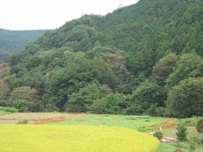 f:id:komonoyasan:20190421132425j:plain