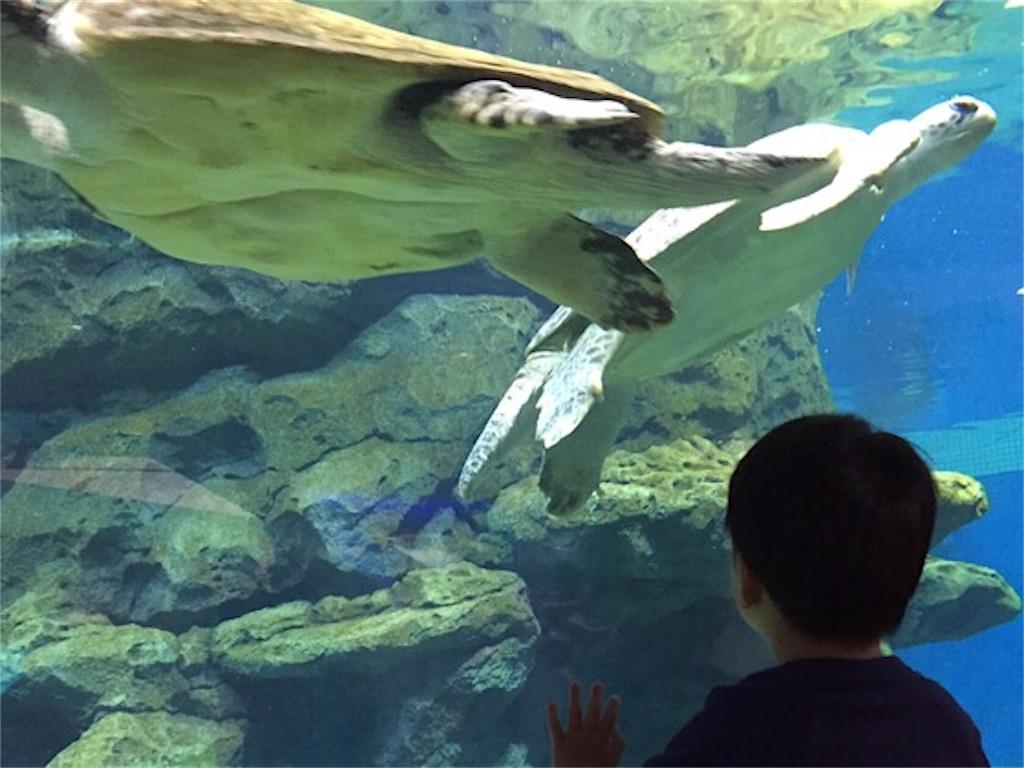 ウミガメ回遊水槽