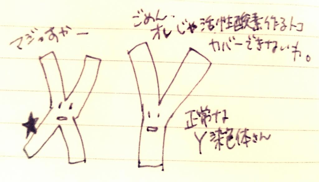 f:id:komugi1222:20160708215534j:plain