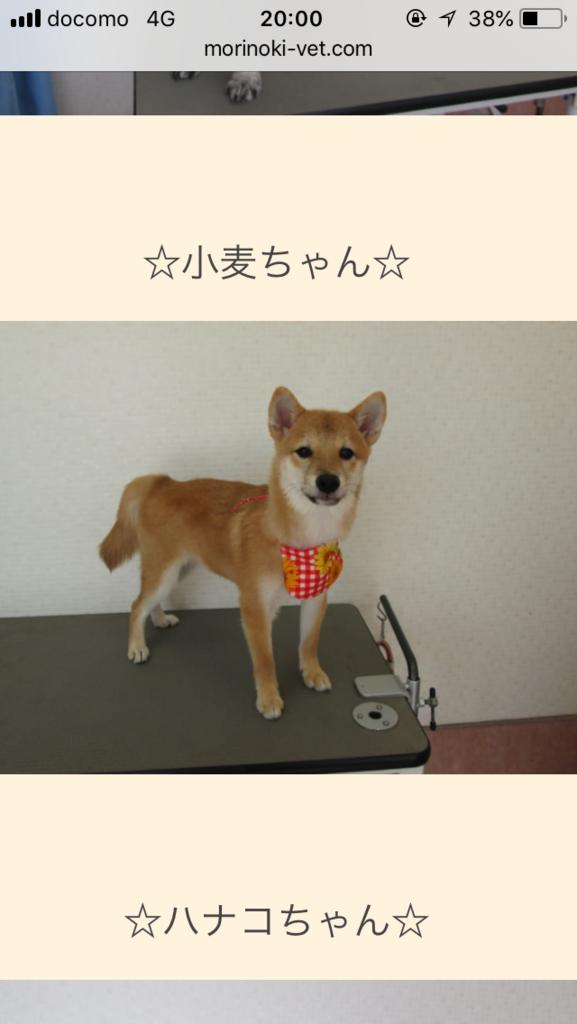f:id:komugi222:20180819201946p:plain