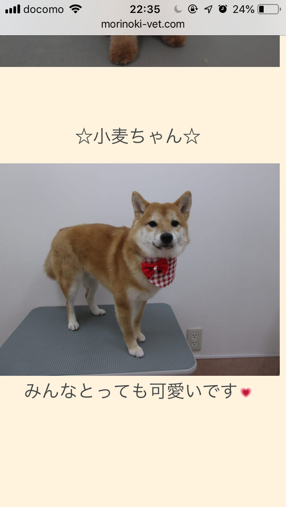 f:id:komugi222:20181117170415p:plain