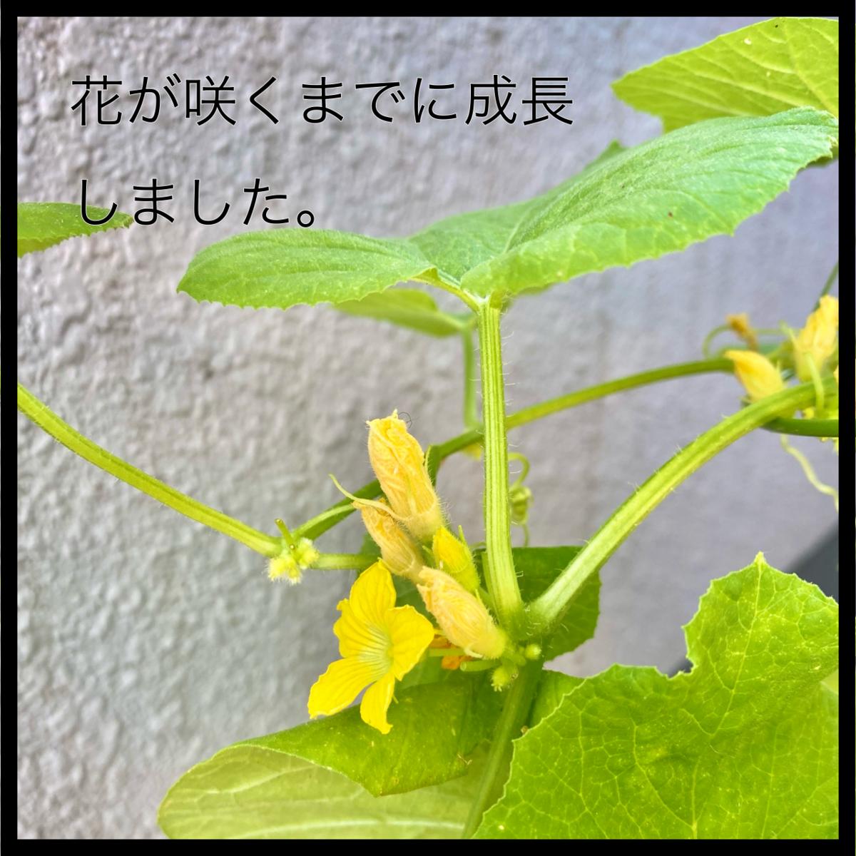 f:id:komyusyomama:20210906133846p:plain