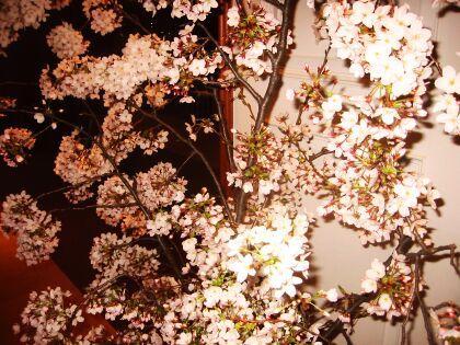 f:id:kon-kon:20050405013133:image
