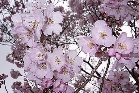 f:id:kon-kon:20060416142307j:image
