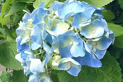 f:id:kon-kon:20060618123101j:image