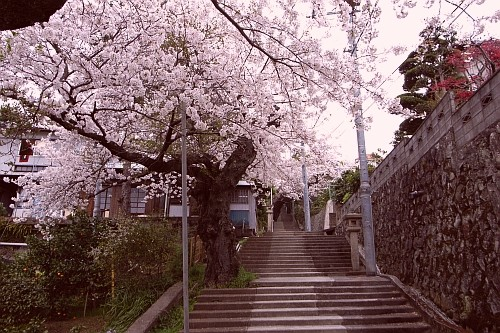 f:id:kon-kon:20070401165833j:image