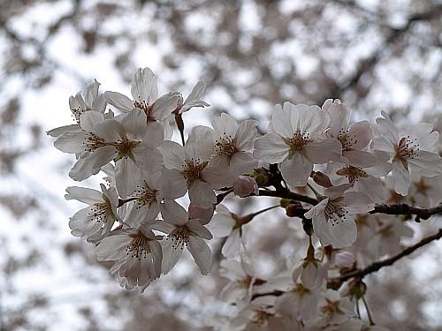 f:id:kon-kon:20080330104950j:image