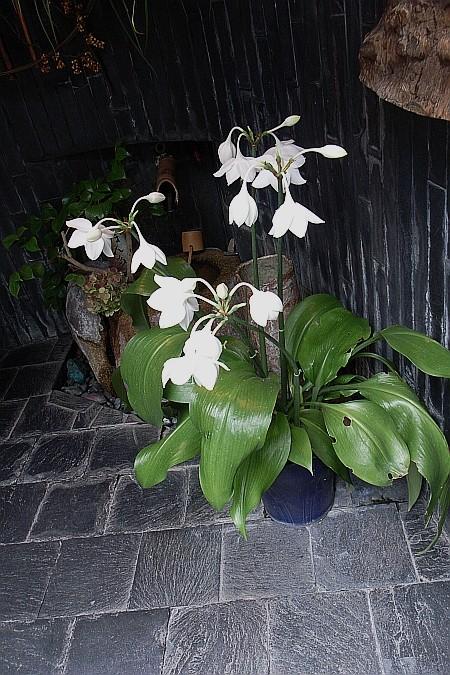 f:id:kon-kon:20080722130342j:image