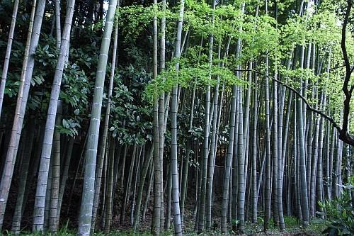 f:id:kon-kon:20090402172454j:image