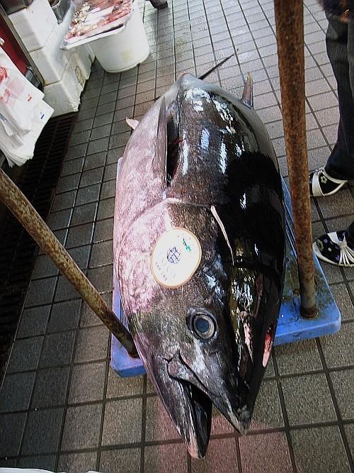 f:id:kon-kon:20090529111240j:image