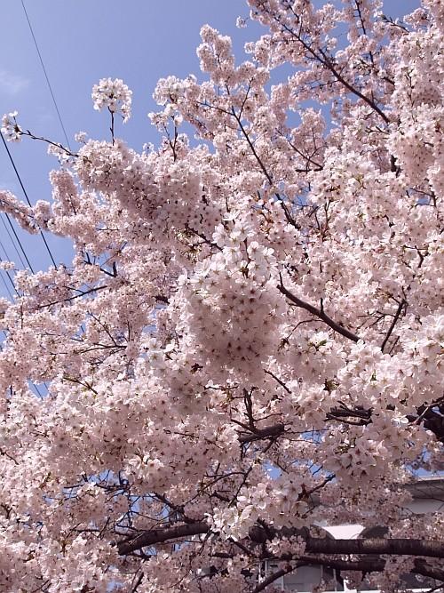 f:id:kon-kon:20110410141231j:image