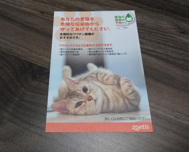 f:id:konashimaya:20210219183602j:image