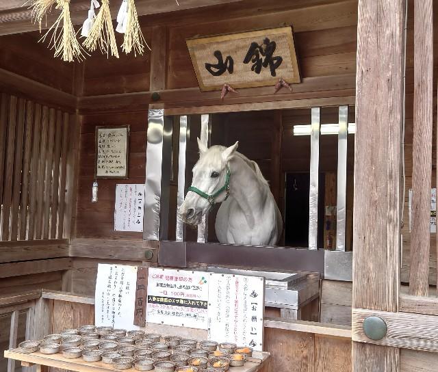 f:id:konashimaya:20210331221252j:image