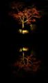兼六園ライトアップ 水に映る紅葉