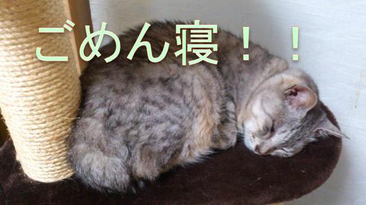 f:id:konayuki358:20160628212349p:plain