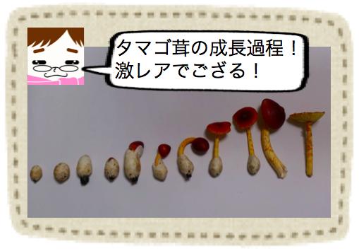 f:id:konayuki358:20160801085446p:plain