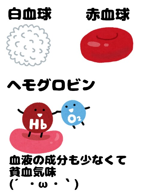 f:id:konayuki358:20181231073446j:image
