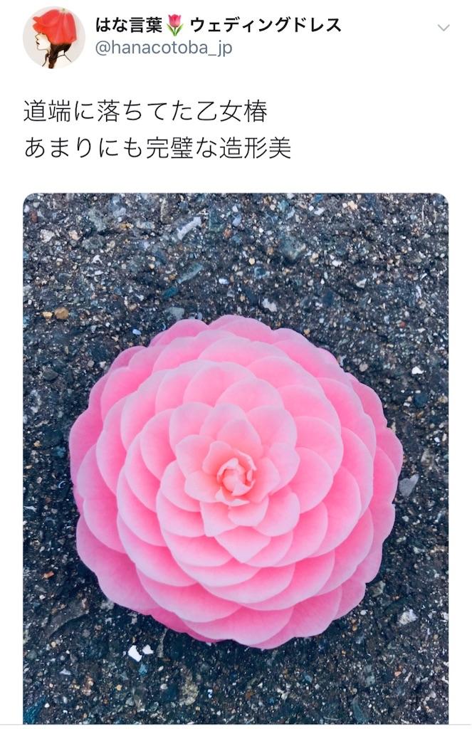 f:id:konkatsu50:20200408105934j:image