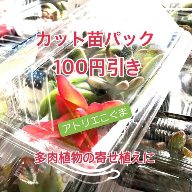 f:id:konnbuyasiosai:20201125102938j:image