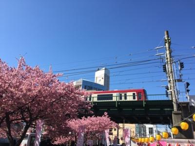 京急久里浜線三浦海岸駅近く&河津桜
