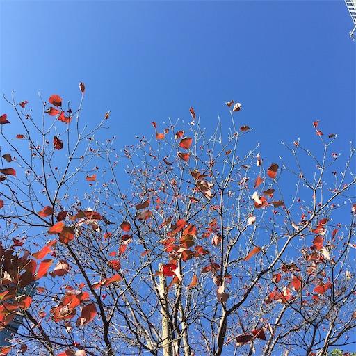 f:id:konohanaseki:20201111085254j:image