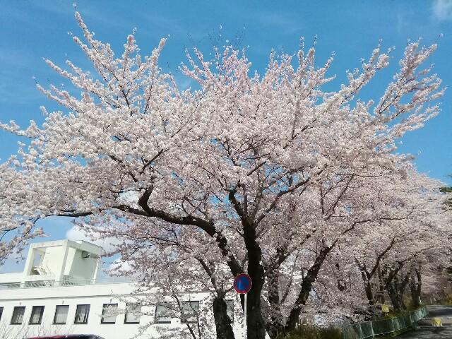 f:id:konohazukutsushin:20200426144410j:image
