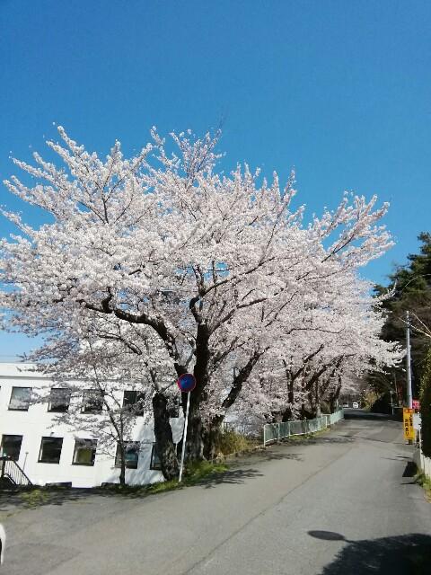 f:id:konohazukutsushin:20210416182733j:image