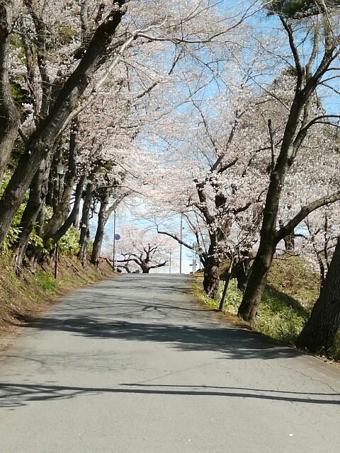 f:id:konohazukutsushin:20210416183120j:image