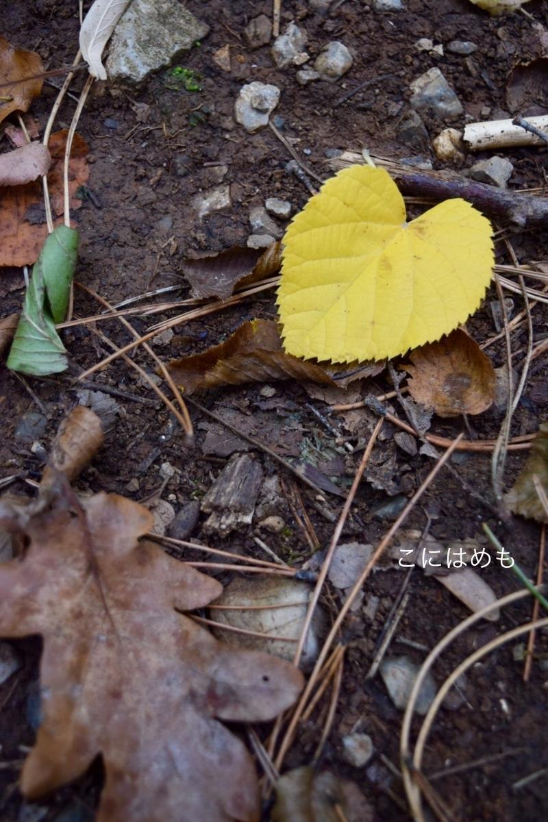菩提樹の葉っぱ。
