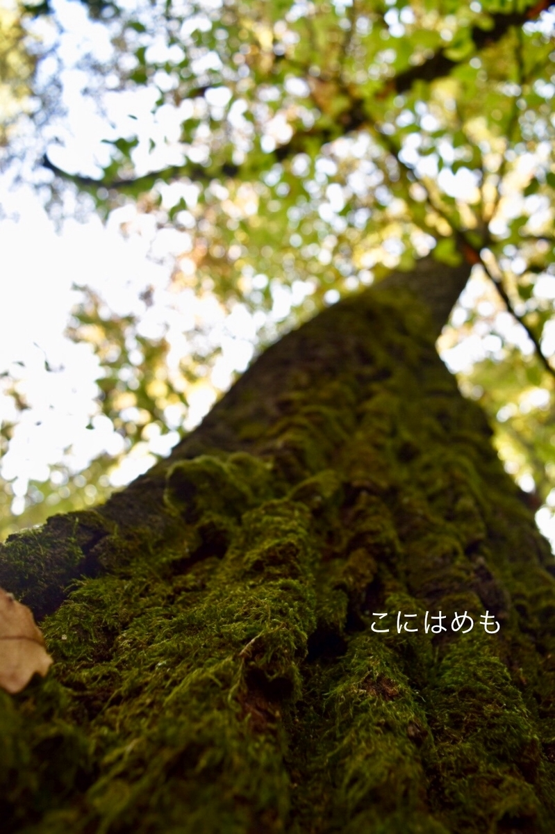 苔の生えた木。