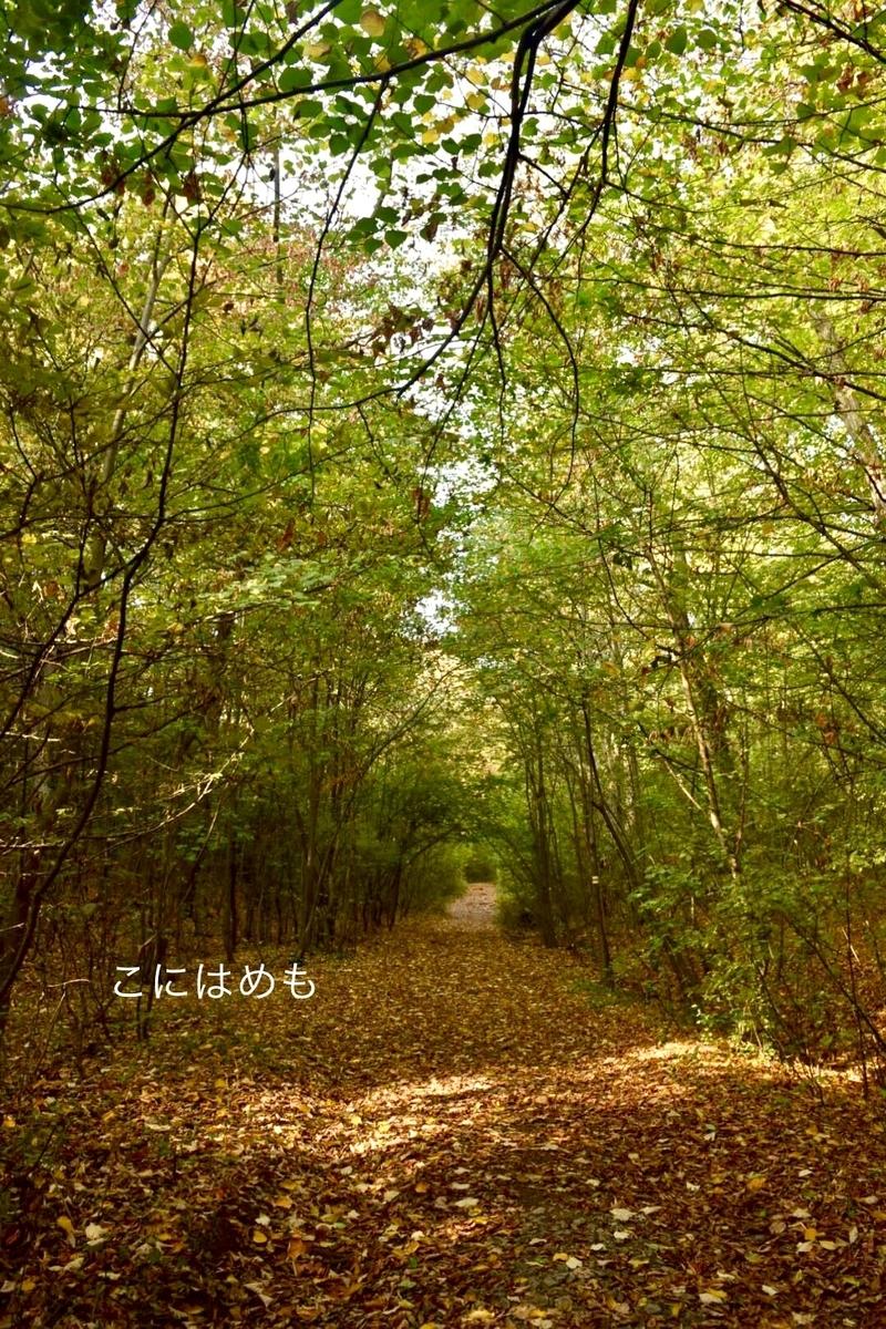 落ち葉と秋の木々。