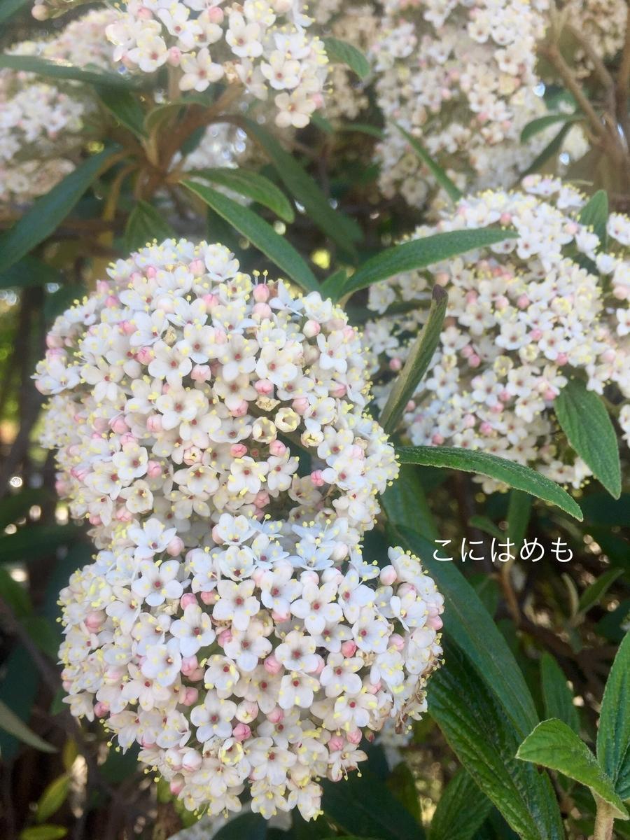 ブダペストの白いお花。