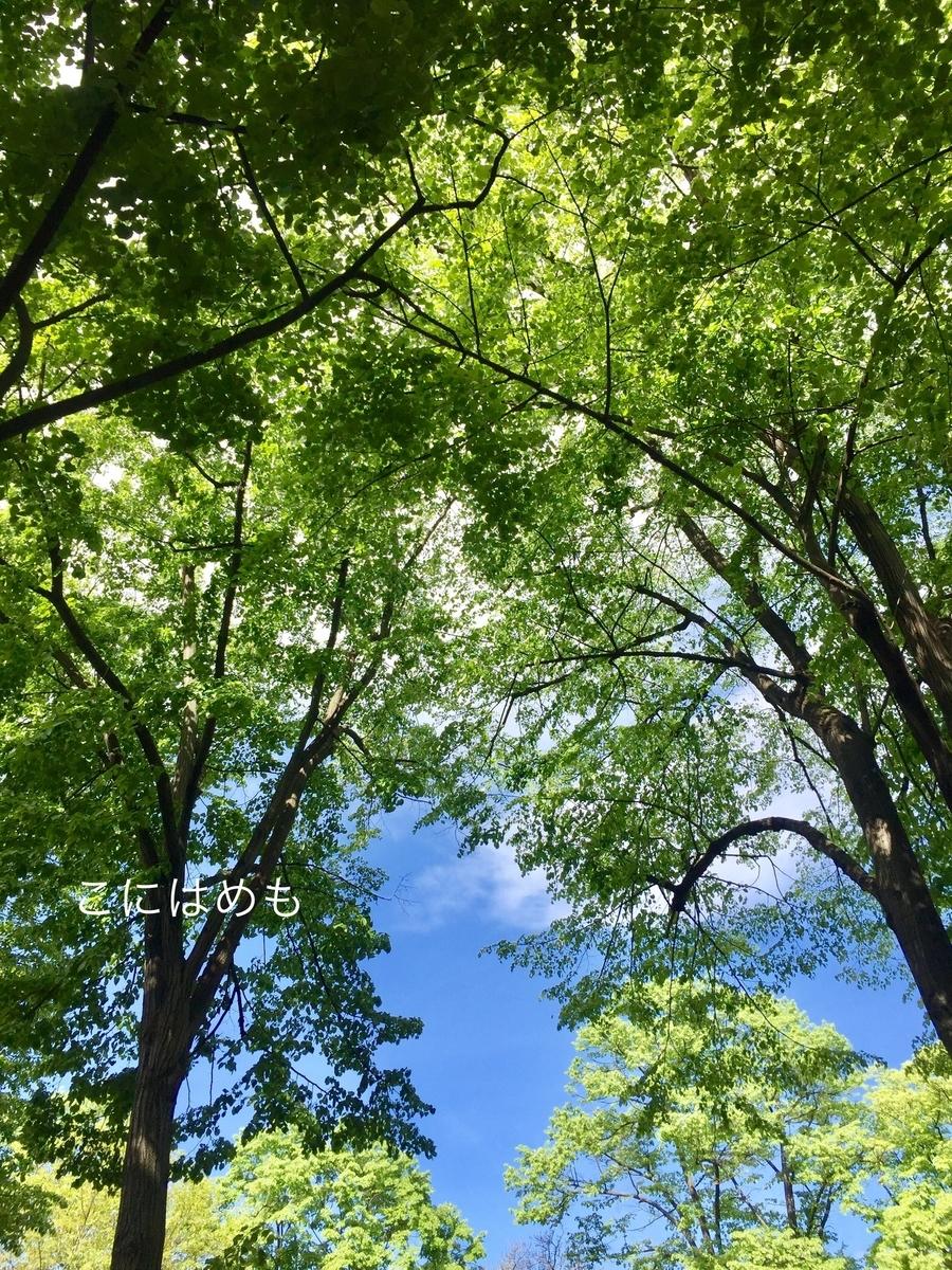 青空と新緑のブダペスト。