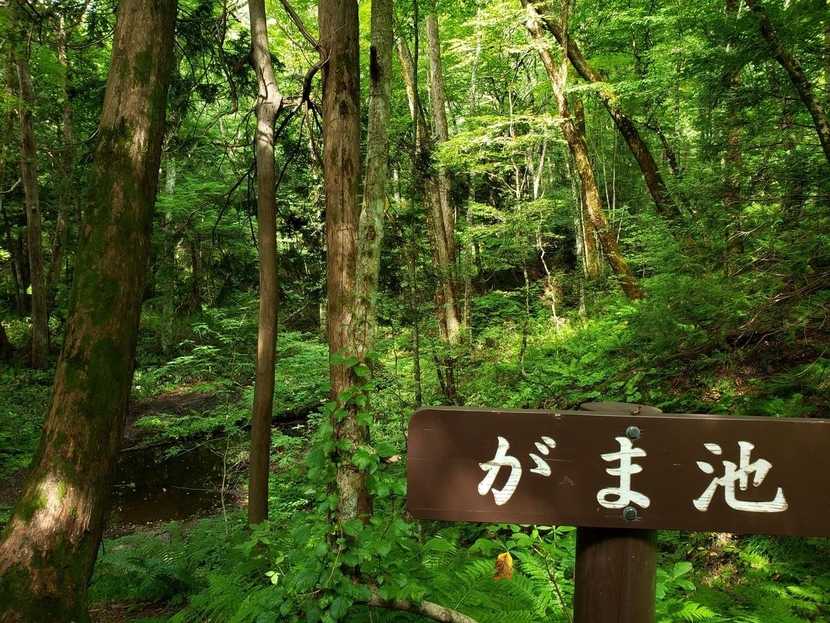 f:id:kootabi:20200219133035j:plain