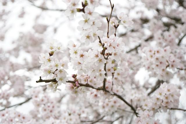 f:id:kore-shufu:20170412224628j:image