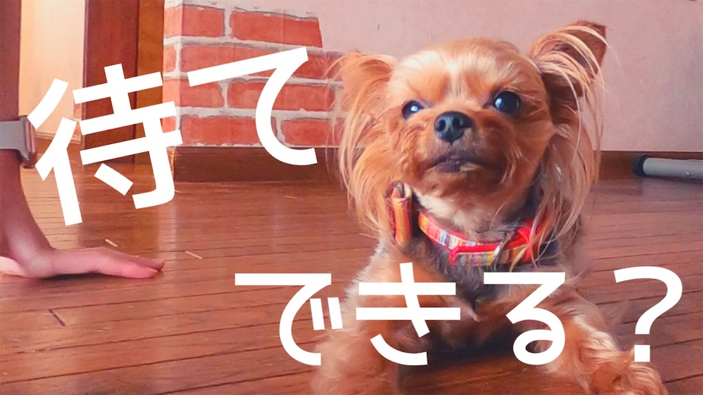 f:id:korekara-watashi:20200529224157j:image