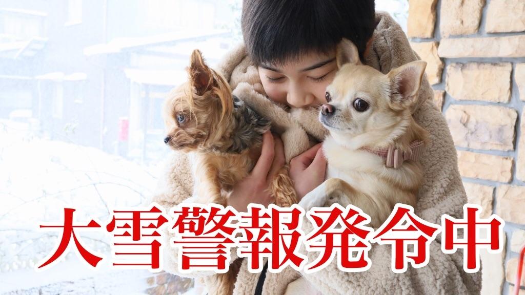 f:id:korekara-watashi:20210110163632j:image