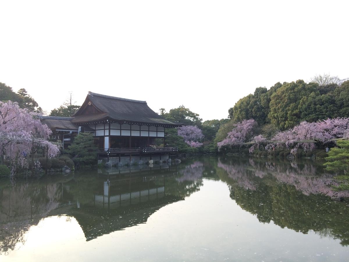 平安神宮の桜 昼