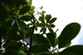 [植物] 小さな花火